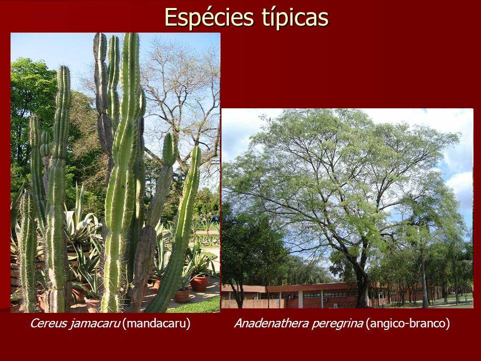 Espécies típicas Cereus jamacaru (mandacaru)