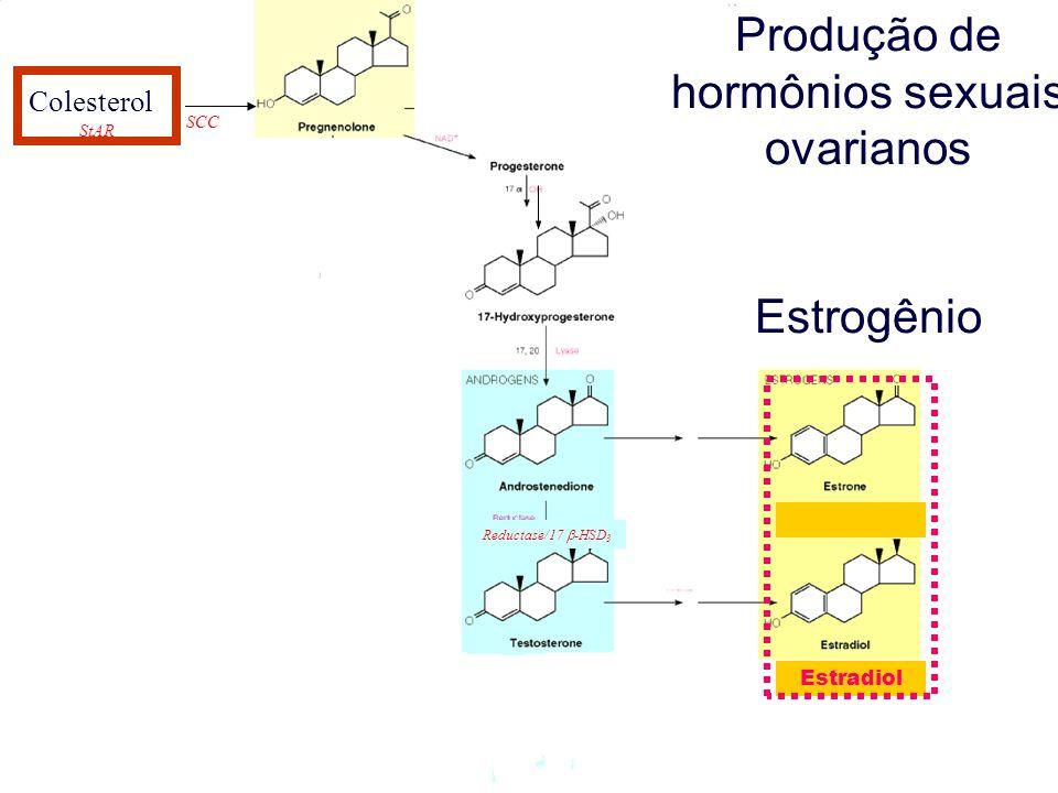Produção de hormônios sexuais ovarianos