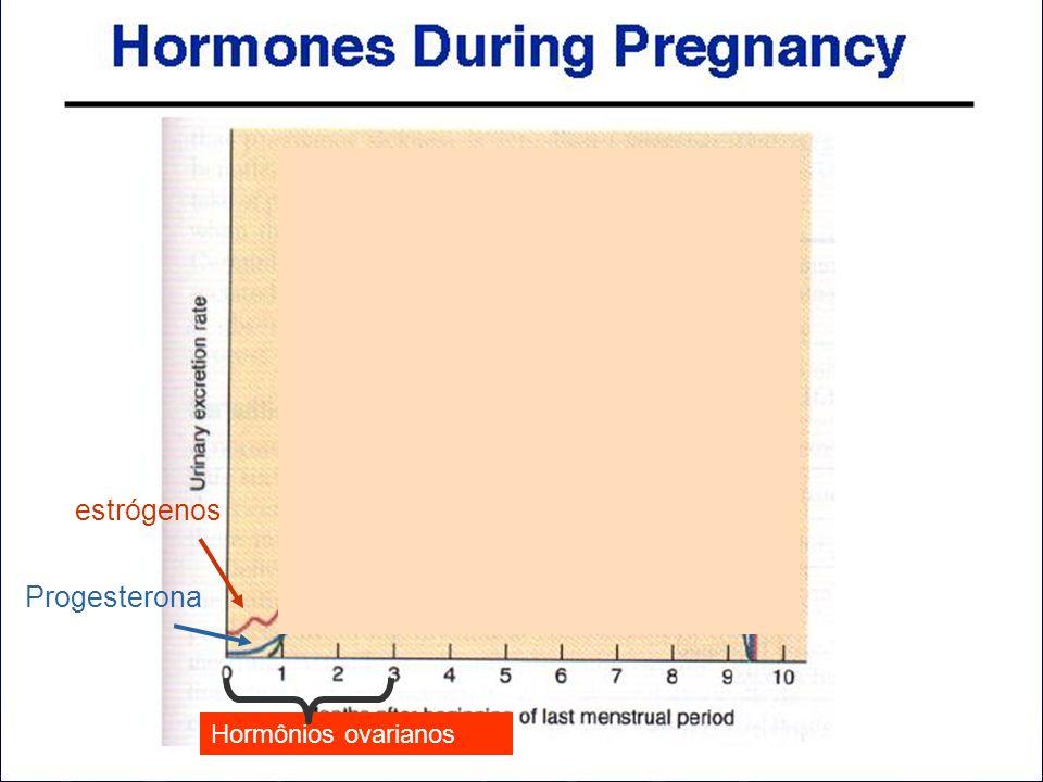 estrógenos Progesterona Hormônios ovarianos
