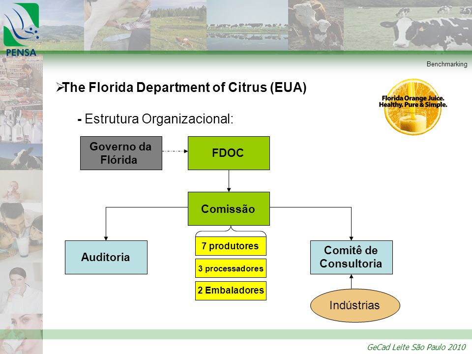 The Florida Department of Citrus (EUA) - Estrutura Organizacional: