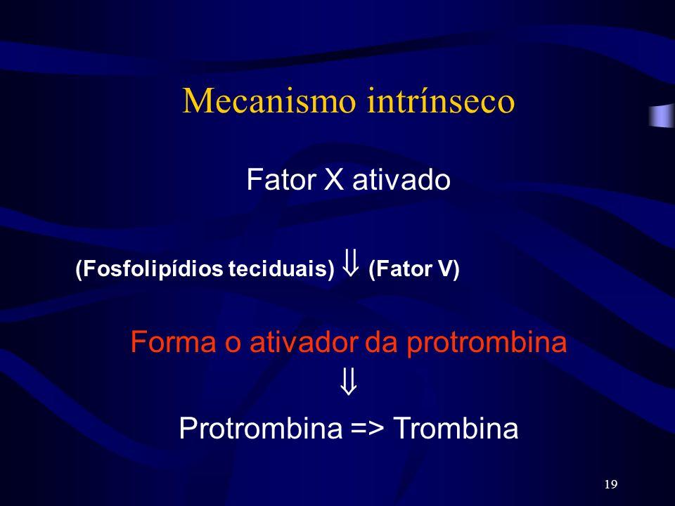 Mecanismo intrínseco Fator X ativado Forma o ativador da protrombina 