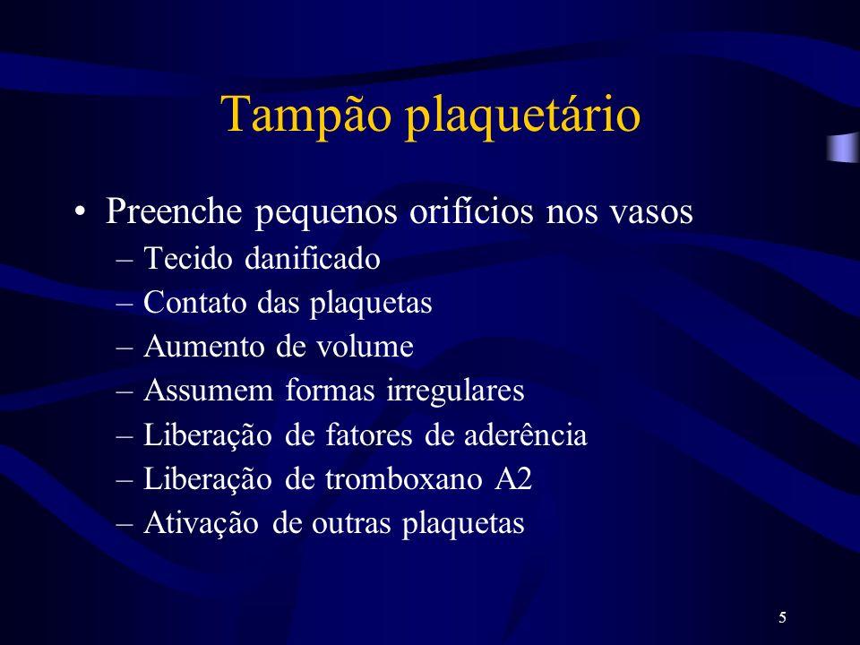 Tampão plaquetário Preenche pequenos orifícios nos vasos