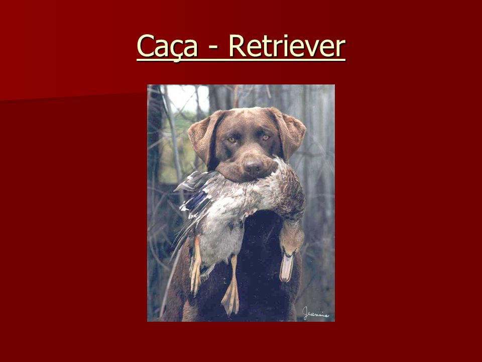Caça - Retriever