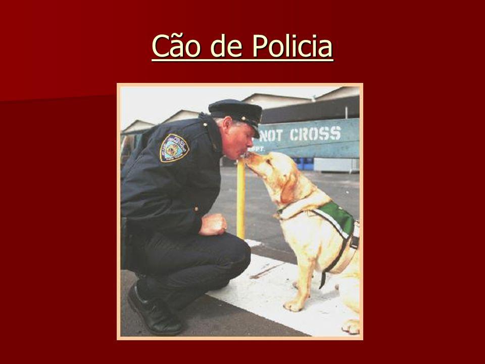 Cão de Policia