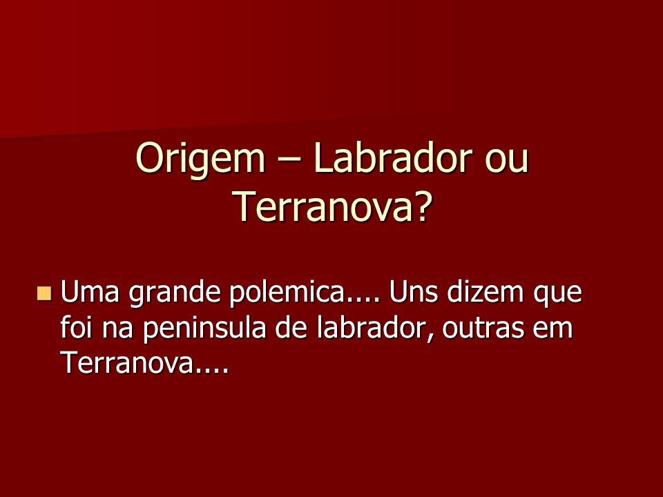 Origem – Labrador ou Terranova
