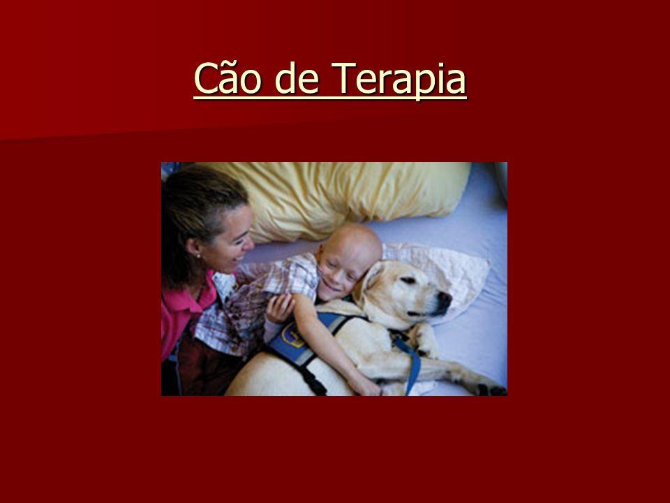 Cão de Terapia