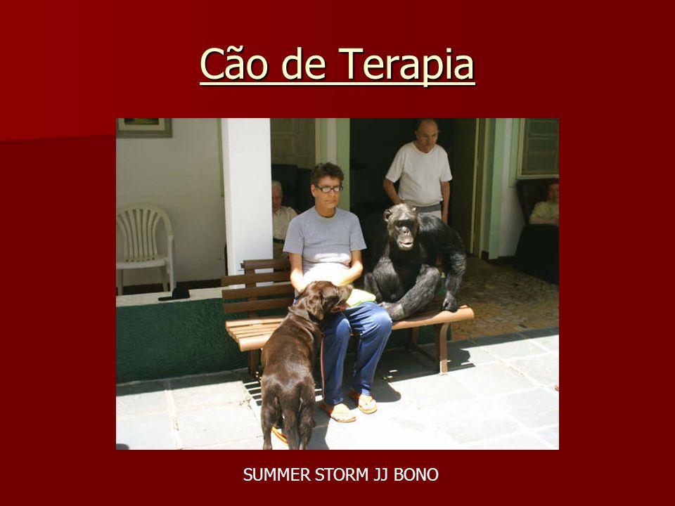 Cão de Terapia SUMMER STORM JJ BONO