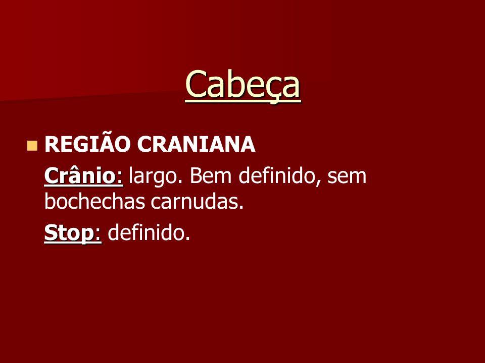 Cabeça REGIÃO CRANIANA