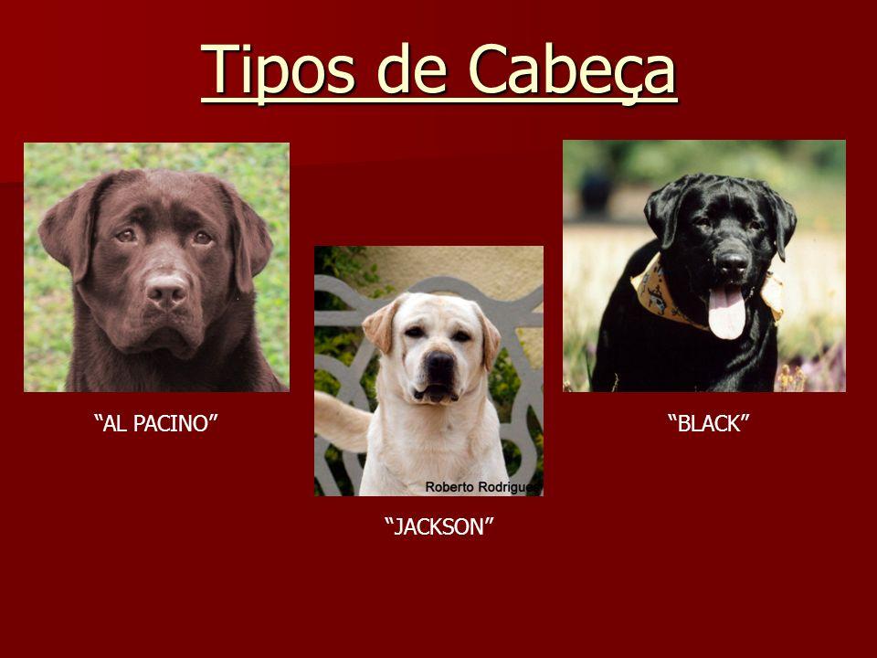 Tipos de Cabeça AL PACINO BLACK JACKSON