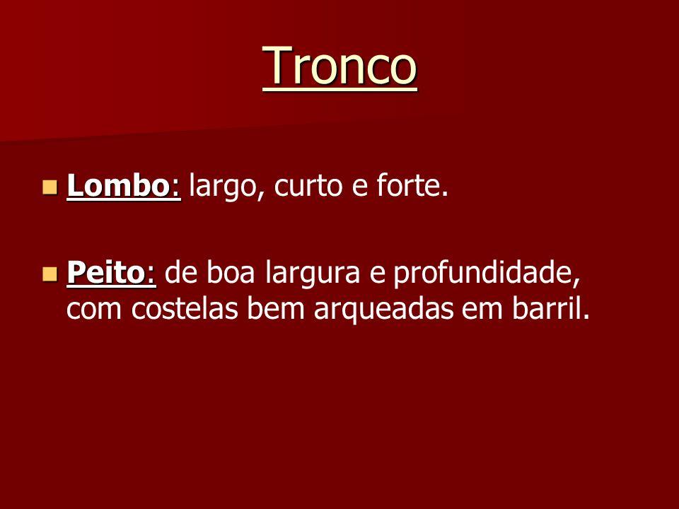 Tronco Lombo: largo, curto e forte.
