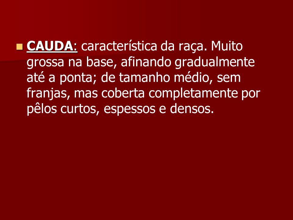 CAUDA: característica da raça