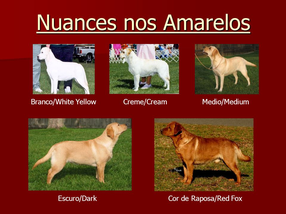 Nuances nos Amarelos Branco/White Yellow Creme/Cream Medio/Medium