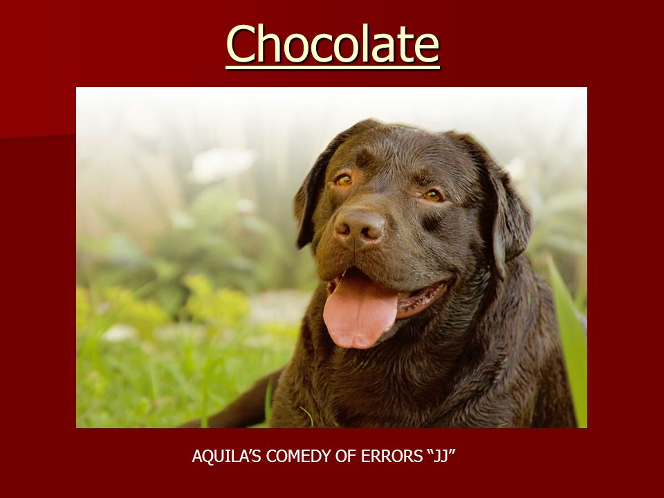Chocolate AQUILA'S COMEDY OF ERRORS JJ