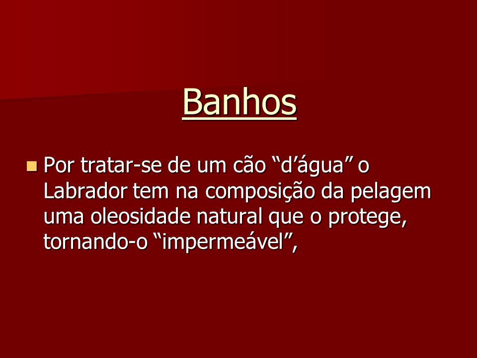BanhosPor tratar-se de um cão d'água o Labrador tem na composição da pelagem uma oleosidade natural que o protege, tornando-o impermeável ,