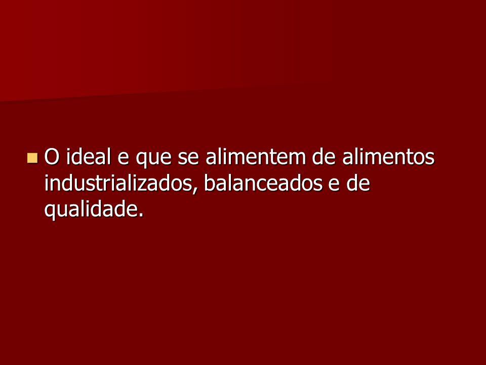 O ideal e que se alimentem de alimentos industrializados, balanceados e de qualidade.