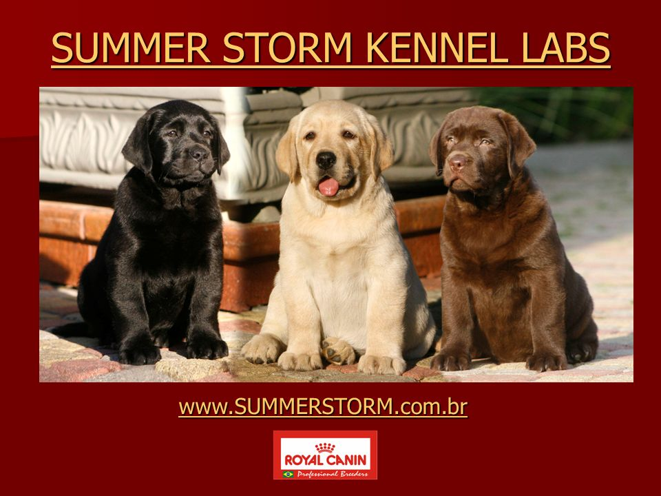 SUMMER STORM KENNEL LABS