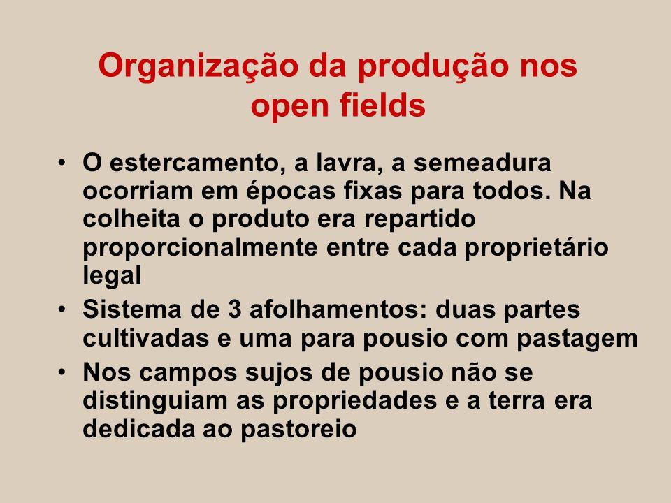 Organização da produção nos open fields