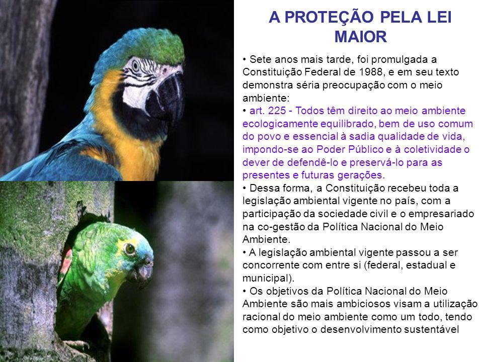 A PROTEÇÃO PELA LEI MAIOR