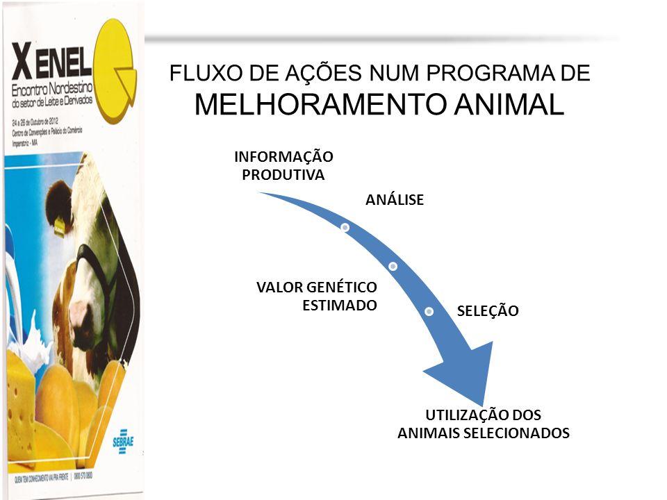 UNIVERSIDADE ESTADUAL DO MARANHÃO