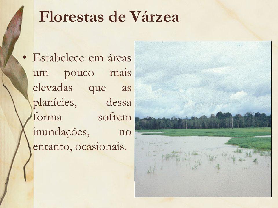 Florestas de Várzea Estabelece em áreas um pouco mais elevadas que as planícies, dessa forma sofrem inundações, no entanto, ocasionais.