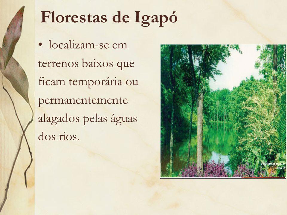 Florestas de Igapó localizam-se em terrenos baixos que