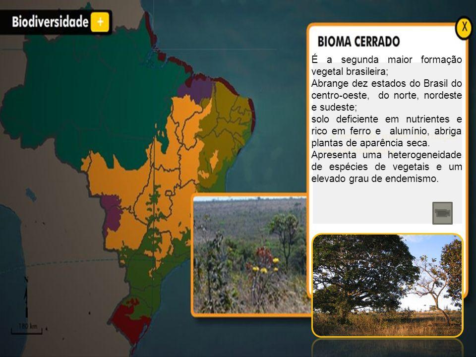 É a segunda maior formação vegetal brasileira;