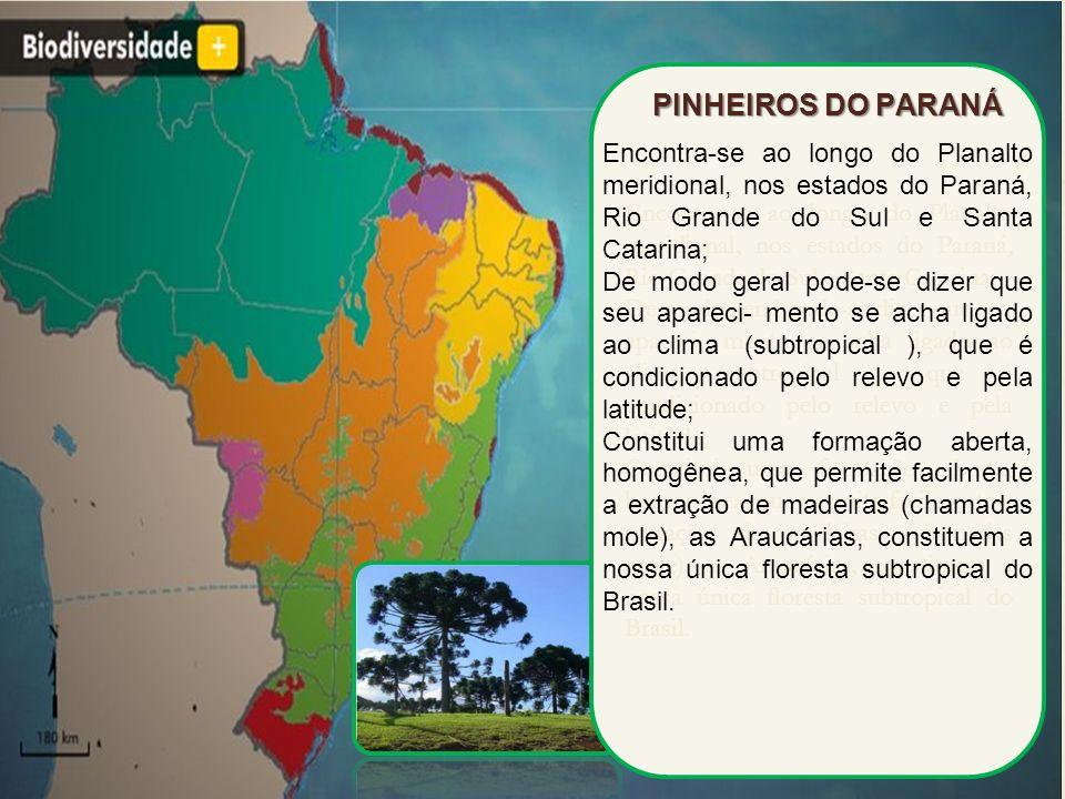 PINHEIROS DO PARANÁ Encontra-se ao longo do Planalto meridional, nos estados do Paraná, Rio Grande do Sul e Santa Catarina;