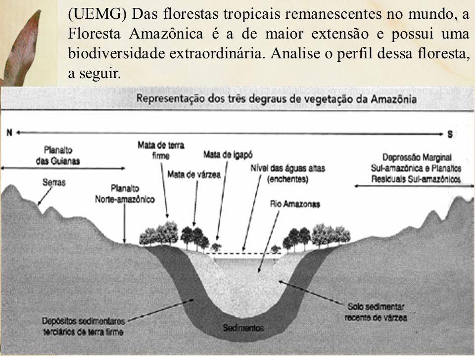 (UEMG) Das florestas tropicais remanescentes no mundo, a Floresta Amazônica é a de maior extensão e possui uma biodiversidade extraordinária. Analise o perfil dessa floresta, a seguir.