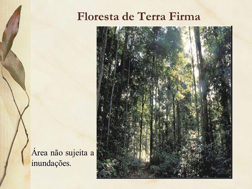 Floresta de Terra Firma