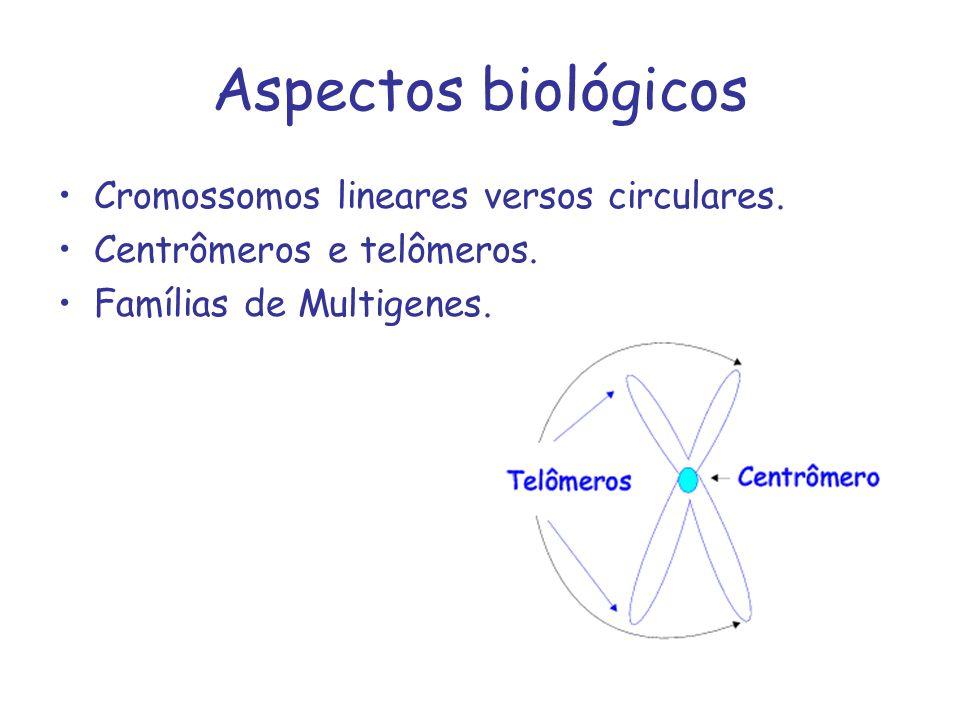Aspectos biológicos Cromossomos lineares versos circulares.