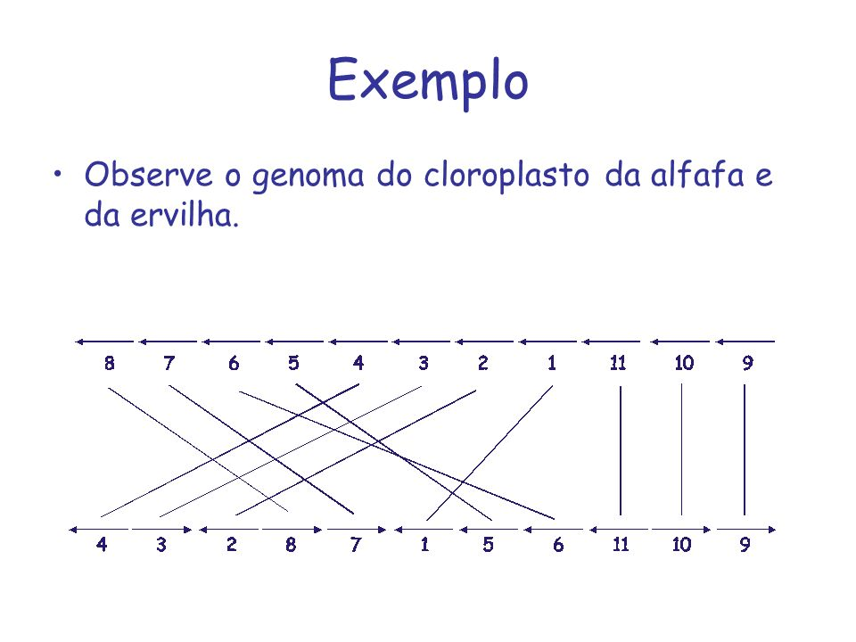Exemplo Observe o genoma do cloroplasto da alfafa e da ervilha.