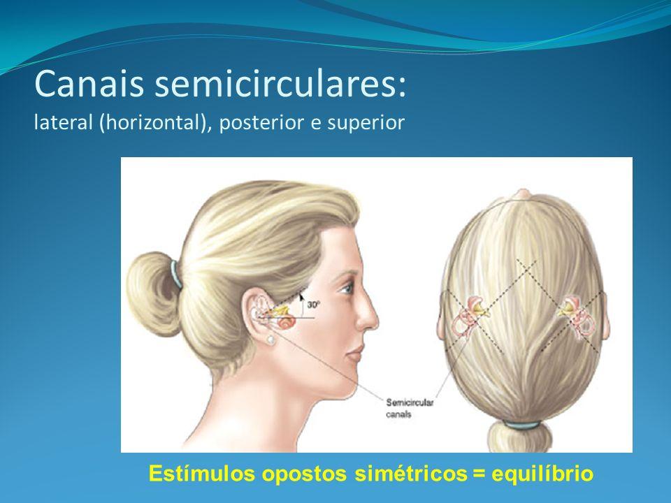 Canais semicirculares: lateral (horizontal), posterior e superior
