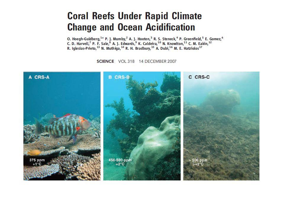 Foto ilustrativa mostrando a dissolução de corais.