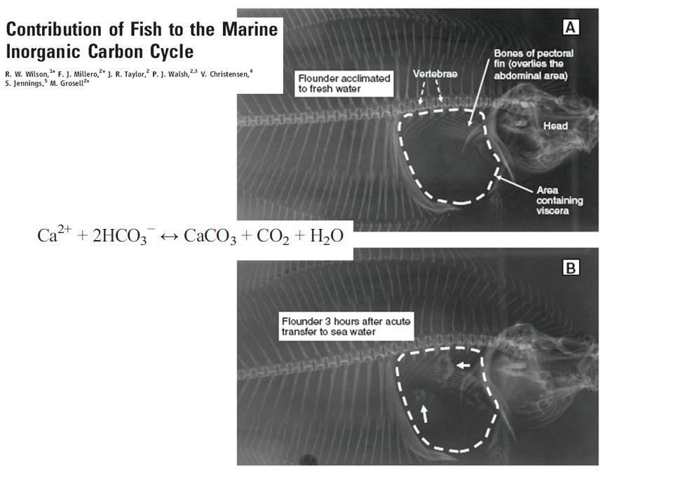 Recentemente (2008) foi descoberto que não somente certo tipo de planctôns mas também por peixes (linguado) que excreta bicarbonato de cálcio.