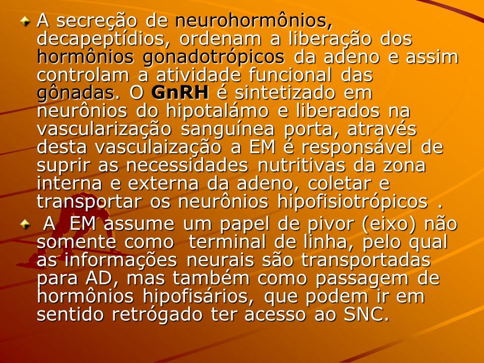A secreção de neurohormônios, decapeptídios, ordenam a liberação dos hormônios gonadotrópicos da adeno e assim controlam a atividade funcional das gônadas. O GnRH é sintetizado em neurônios do hipotalámo e liberados na vascularização sanguínea porta, através desta vasculaização a EM é responsável de suprir as necessidades nutritivas da zona interna e externa da adeno, coletar e transportar os neurônios hipofisiotrópicos .