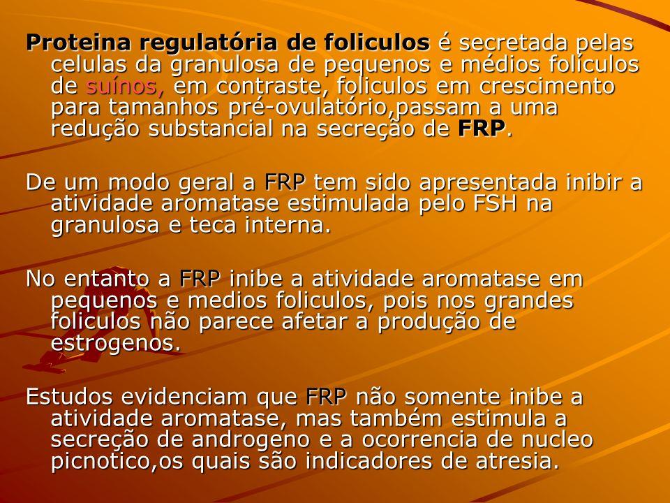 Proteina regulatória de foliculos é secretada pelas celulas da granulosa de pequenos e médios folículos de suínos, em contraste, foliculos em crescimento para tamanhos pré-ovulatório,passam a uma redução substancial na secreção de FRP.