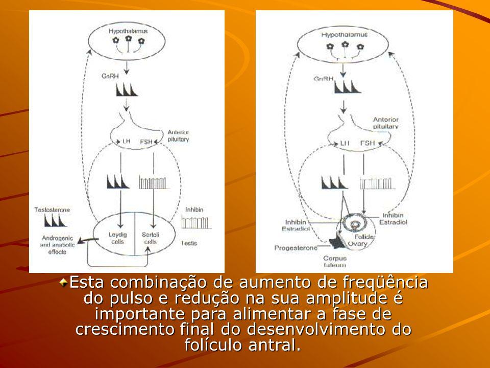 Esta combinação de aumento de freqüência do pulso e redução na sua amplitude é importante para alimentar a fase de crescimento final do desenvolvimento do folículo antral.