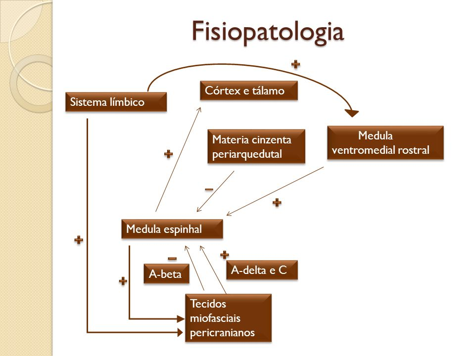 Fisiopatologia Córtex e tálamo Sistema límbico