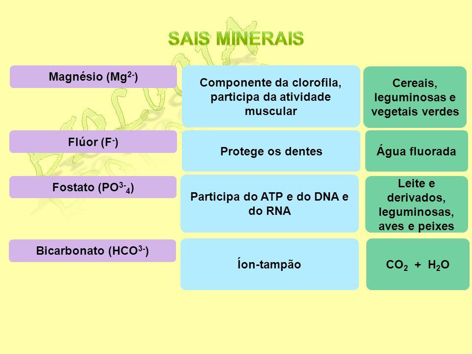 Biologia Sais minerais Magnésio (Mg2-)