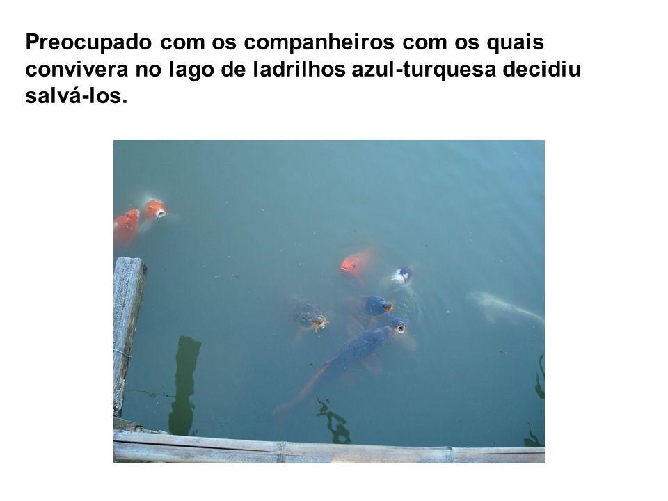 Preocupado com os companheiros com os quais convivera no lago de ladrilhos azul-turquesa decidiu salvá-los.