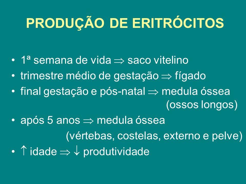 PRODUÇÃO DE ERITRÓCITOS