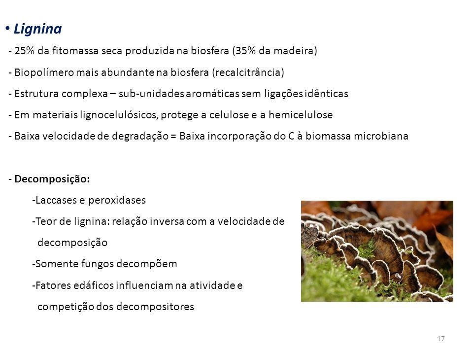 Lignina 25% da fitomassa seca produzida na biosfera (35% da madeira)