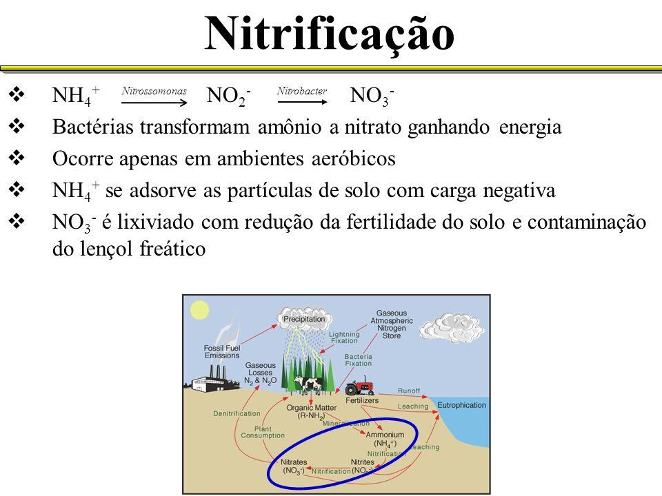 Nitrificação NH4+ NO2- NO3-