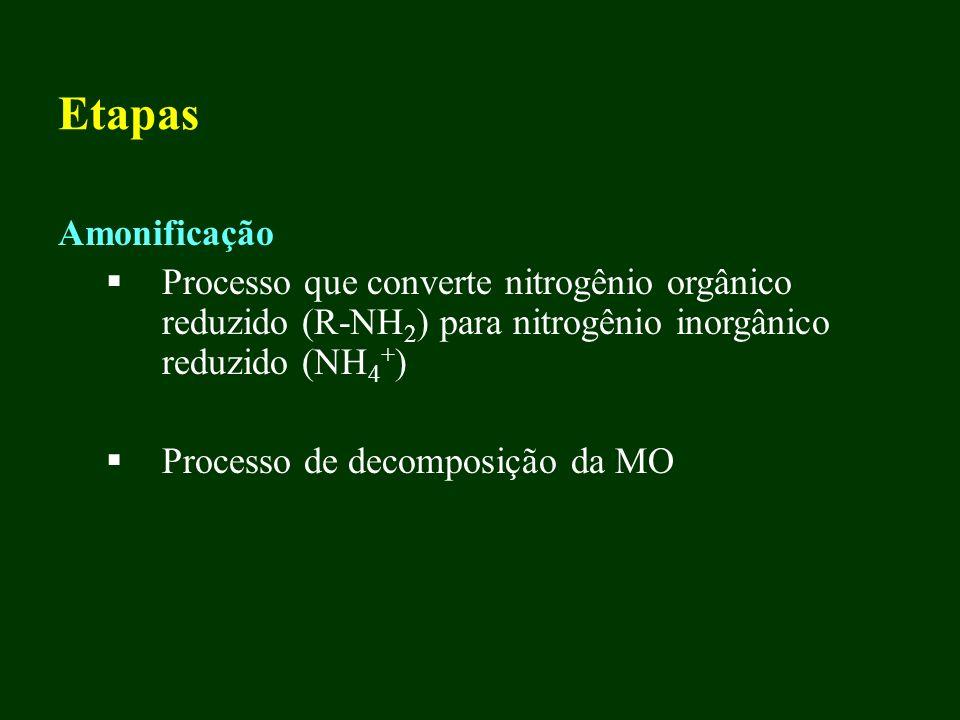 Etapas Amonificação. Processo que converte nitrogênio orgânico reduzido (R-NH2) para nitrogênio inorgânico reduzido (NH4+)