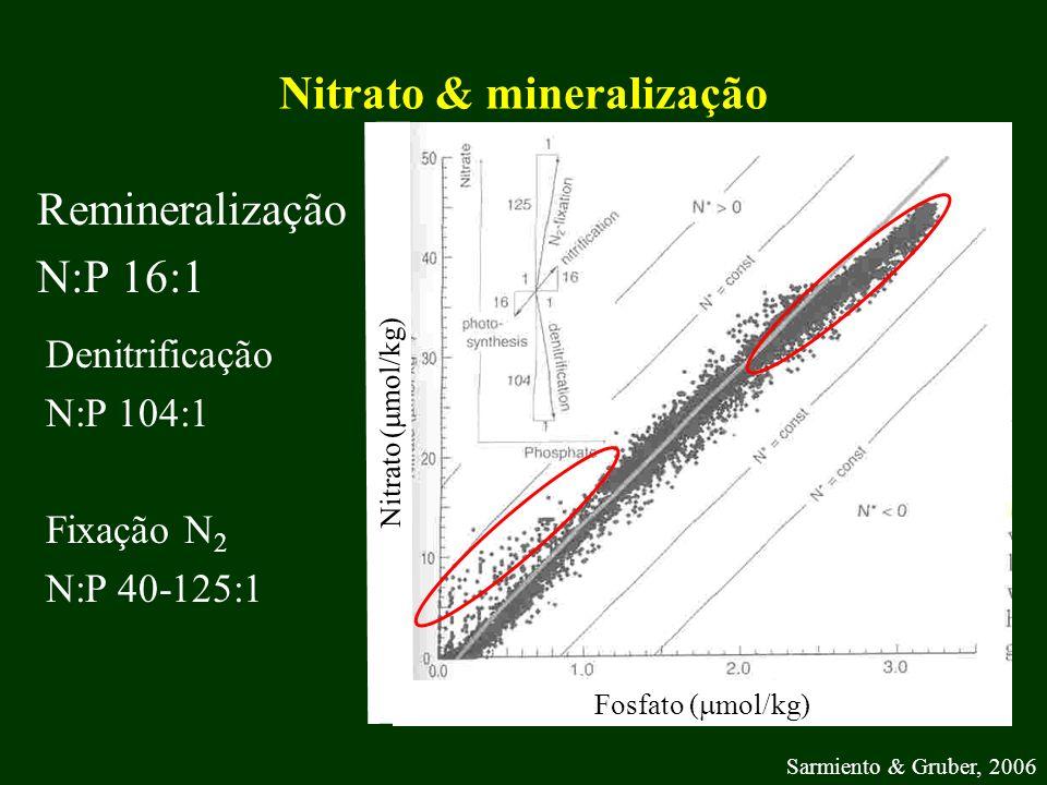 Nitrato & mineralização
