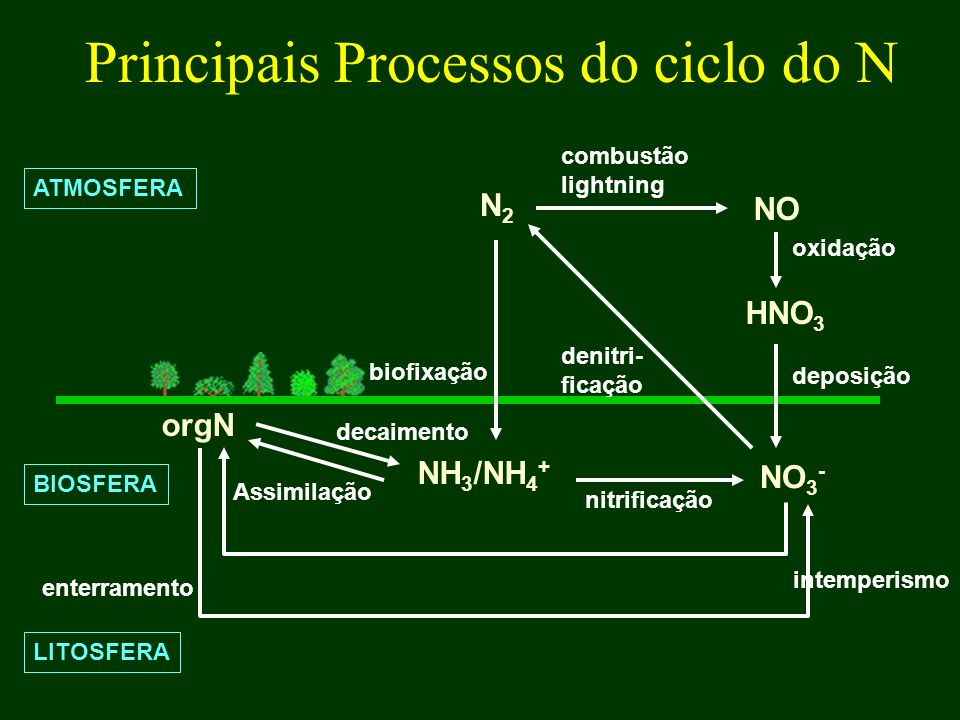 Principais Processos do ciclo do N