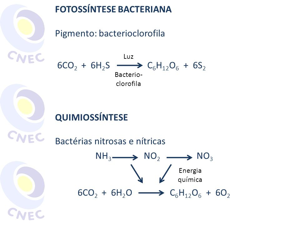 FOTOSSÍNTESE BACTERIANA Pigmento: bacterioclorofila
