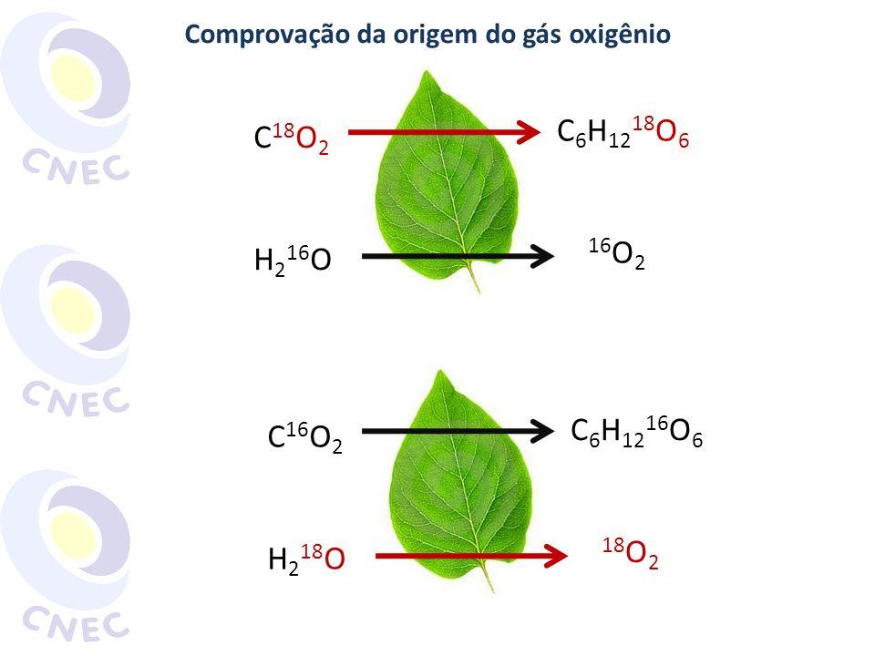Comprovação da origem do gás oxigênio