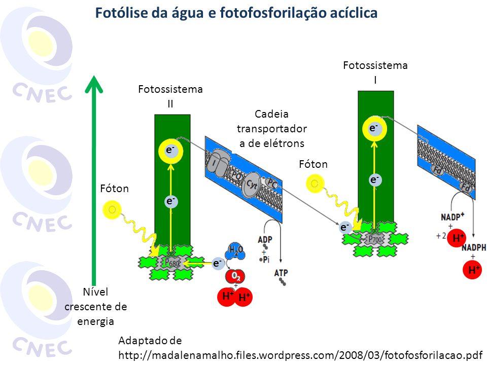 Fotólise da água e fotofosforilação acíclica