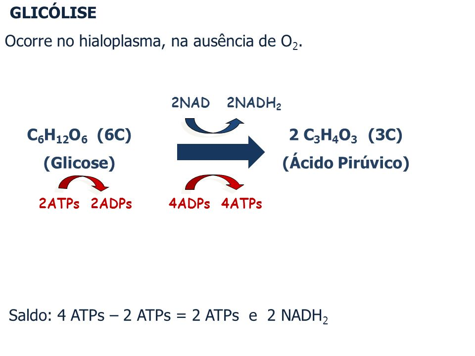 Saldo: 4 ATPs – 2 ATPs = 2 ATPs e 2 NADH2